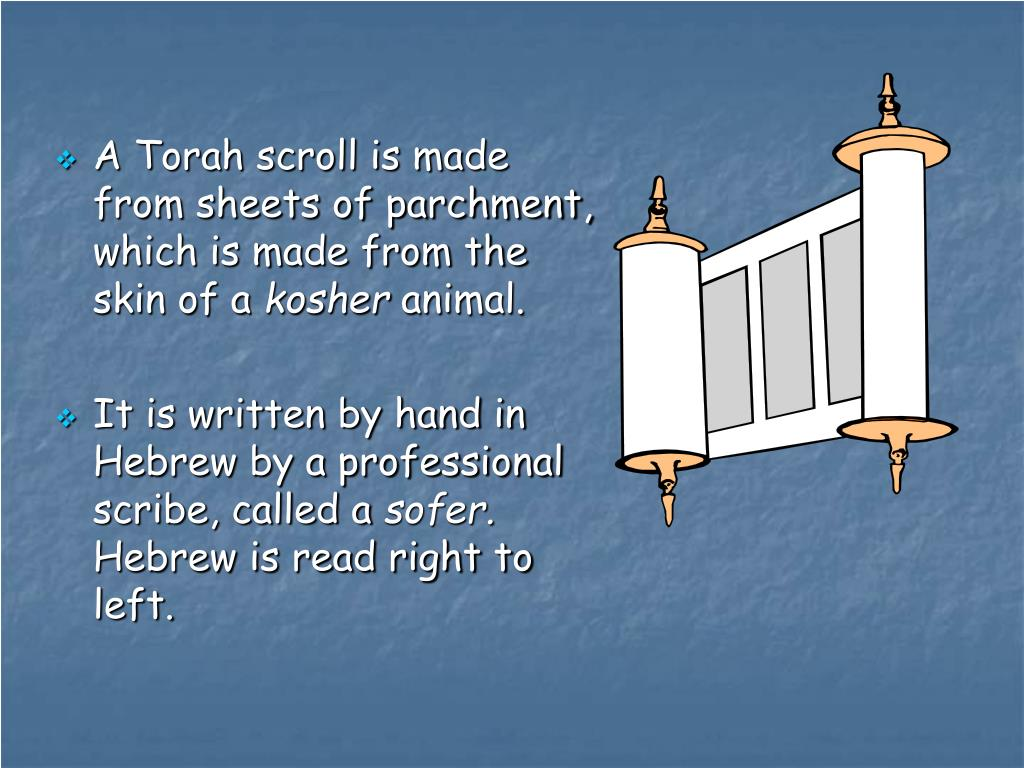 A Torah scroll is made from sheets of parchment, which is made from the skin of a