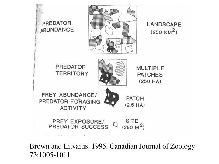 Brown and Litvaitis. 1995. Canadian Journal of Zoology