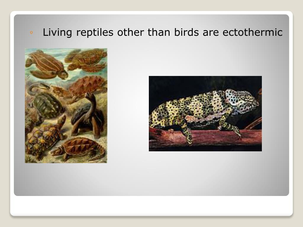 Living reptiles other than birds are ectothermic