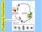 foodborne transmission29