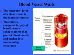 blood vessel walls11
