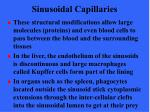 sinusoidal capillaries26