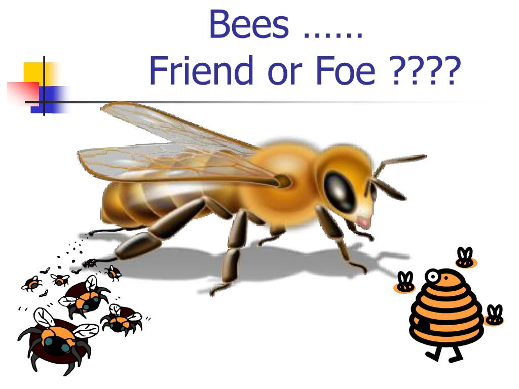 bees friend or foe l.