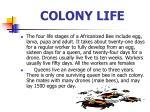colony life