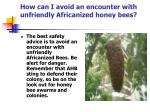 how can i avoid an encounter with unfriendly africanized honey bees