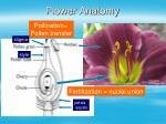 flower anatomy