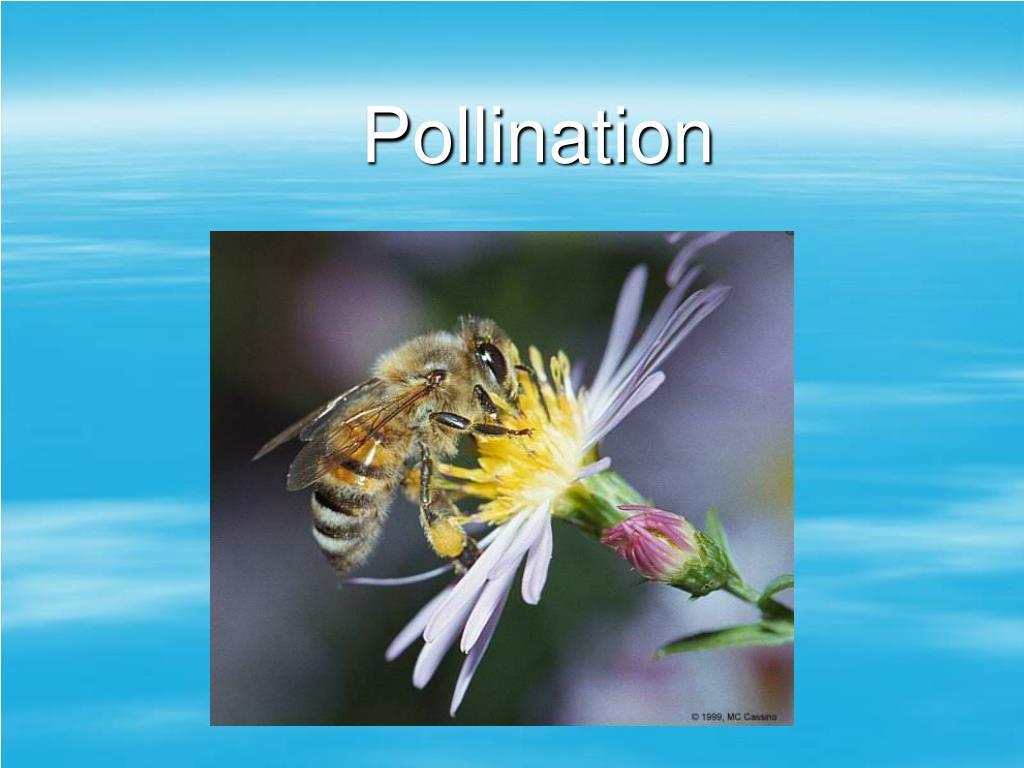 pollination l.