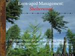 even aged management shelterwood