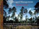 even aged management shelterwood22