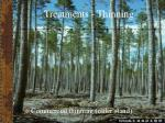 treatments thinning34