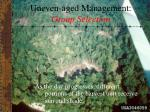 uneven aged management group selection26