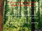 uneven aged management shade tolerant species24