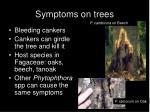 symptoms on trees