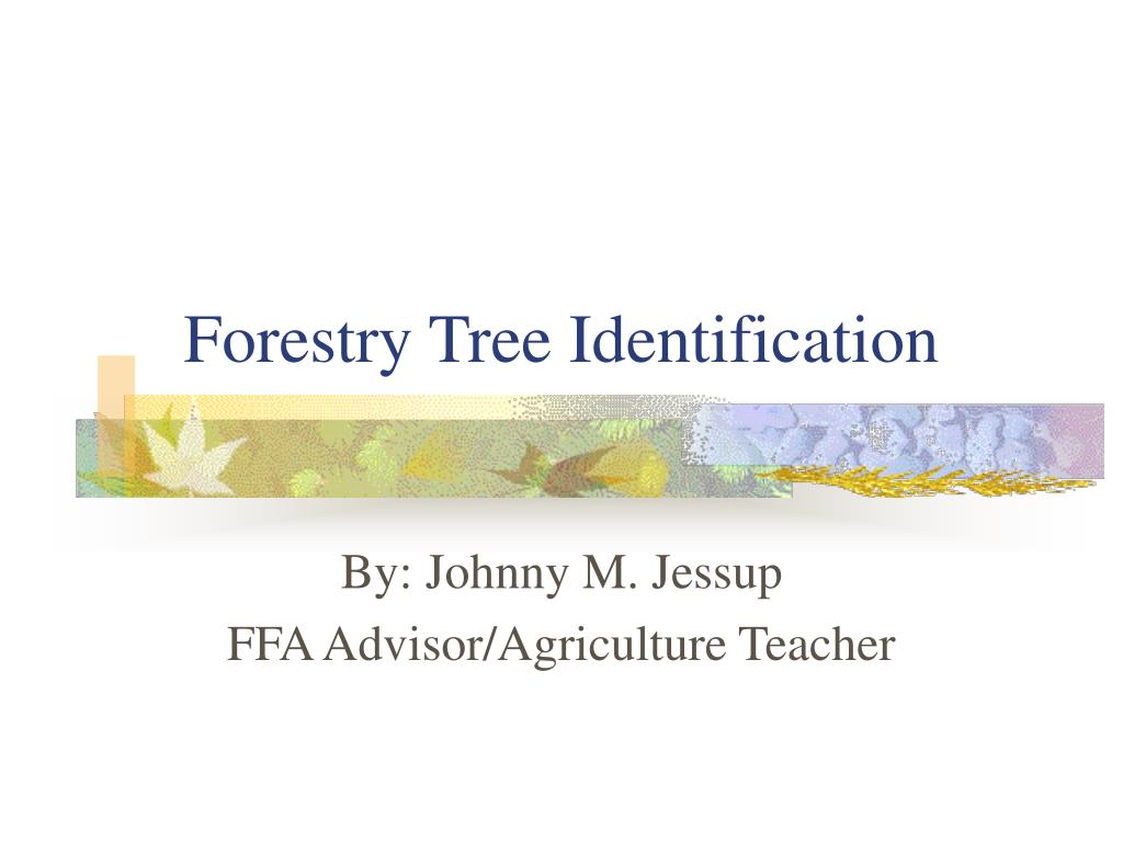 forestry tree identification l.