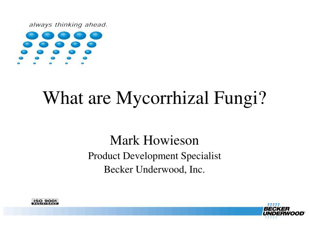 what are mycorrhizal fungi l.