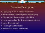 brahman description