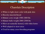 charolais description
