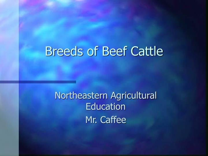 breeds of beef cattle n.