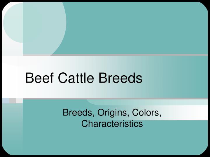 beef cattle breeds n.