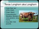 texas longhorn aka longhorn