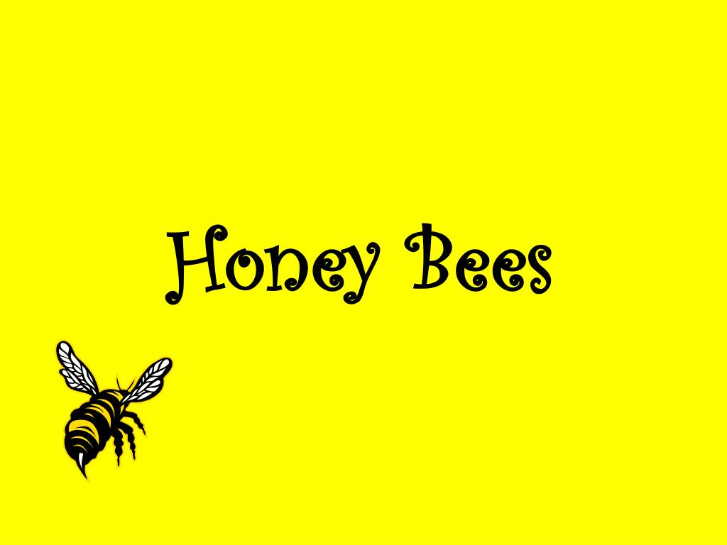 honey bees l.