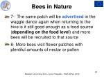 bees in nature22