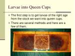 larvae into queen cups