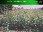sweet sorghum plot at vsi