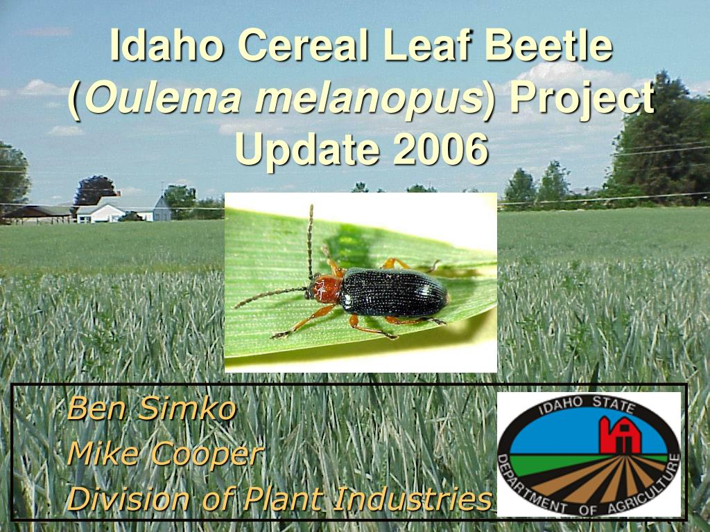 idaho cereal leaf beetle oulema melanopus project update 2006 l.