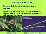 european pine sawfly76