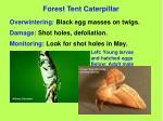 forest tent caterpillar48