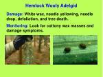 hemlock wooly adelgid65