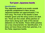turf pest japanese beetle28