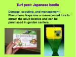turf pest japanese beetle30