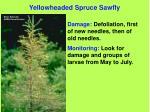 yellowheaded spruce sawfly73