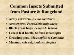 common insects submitted from pasture rangeland