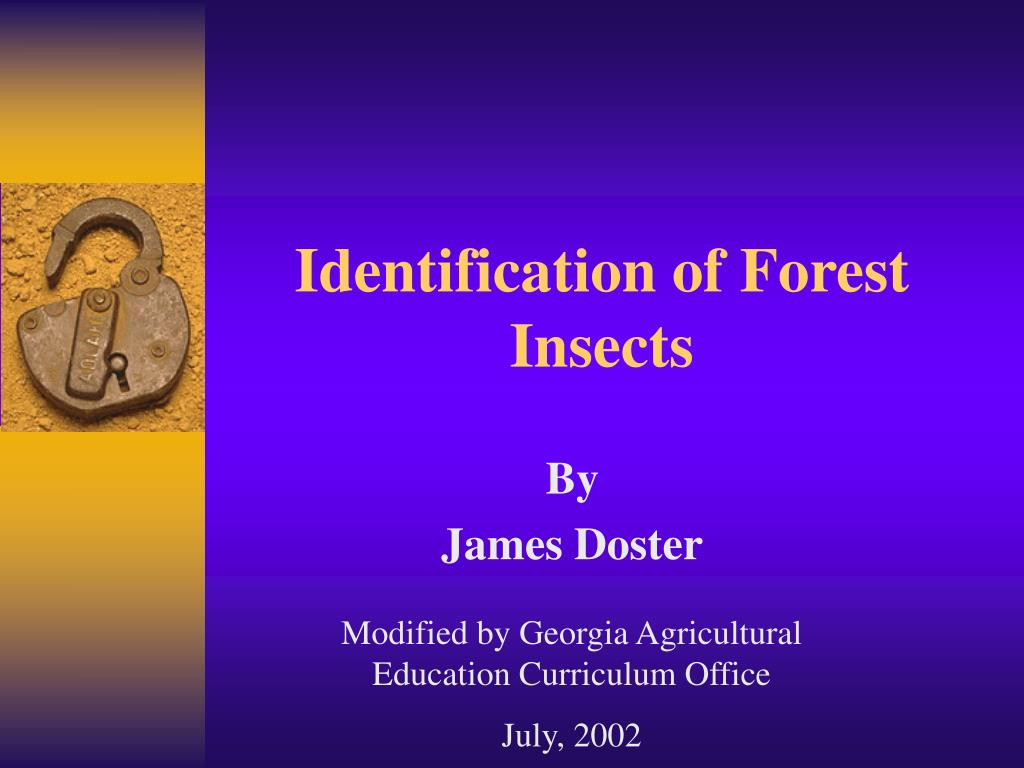 identification of forest insects l.