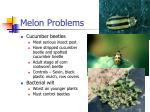 melon problems9
