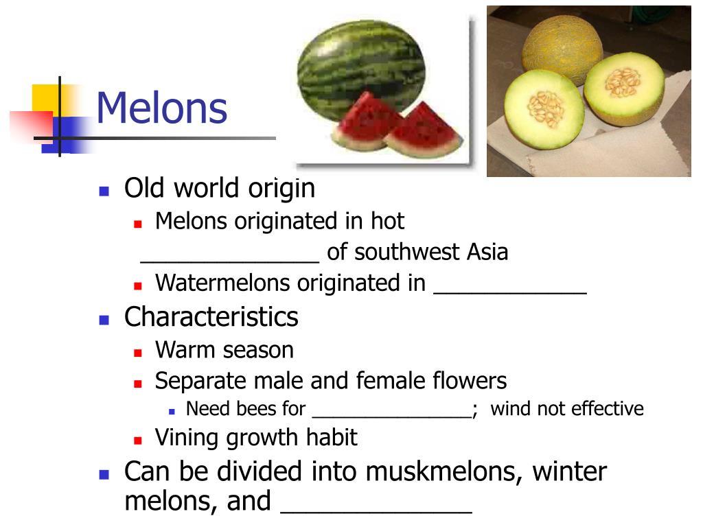 melons l.