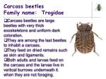 carcass beetles family name trogidae