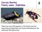 carrion beetles family name silphildae