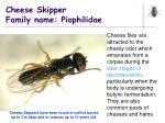 cheese skipper family name piophilidae