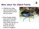 more about the silphid famiily