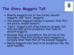 the story maggots tell
