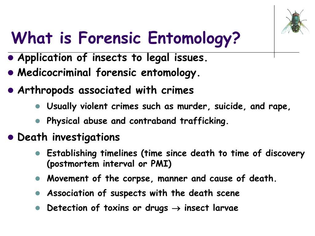florensic entomology essay