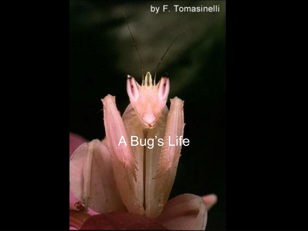a bug s life l.
