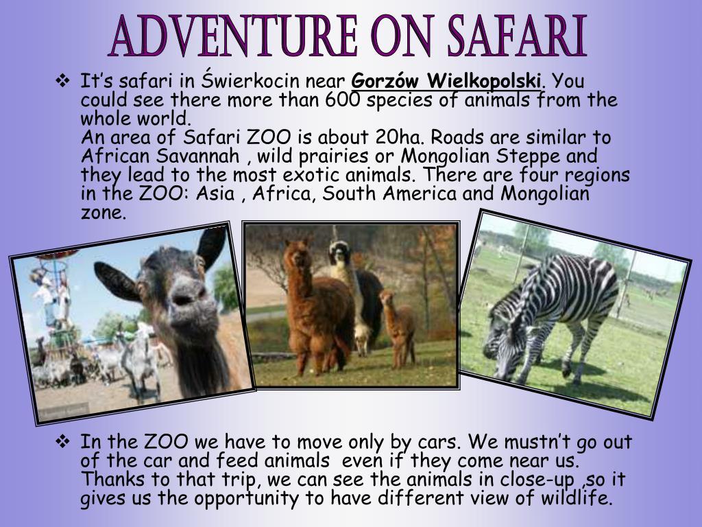 It's safari in Świerkocin near