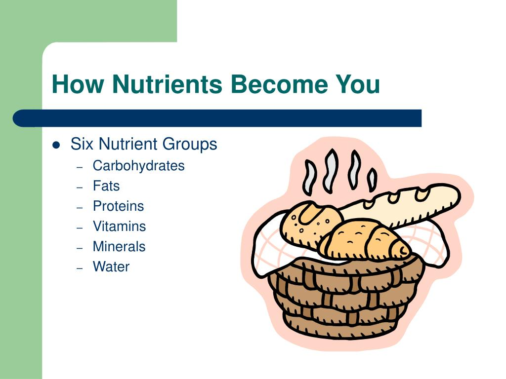 how nutrients become you l.