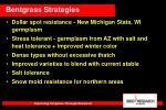 bentgrass strategies