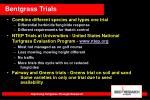 bentgrass trials
